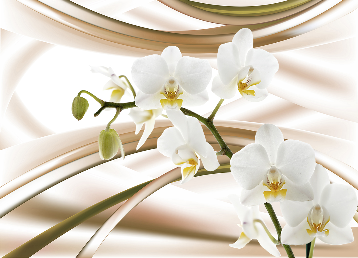 Белая орхидея