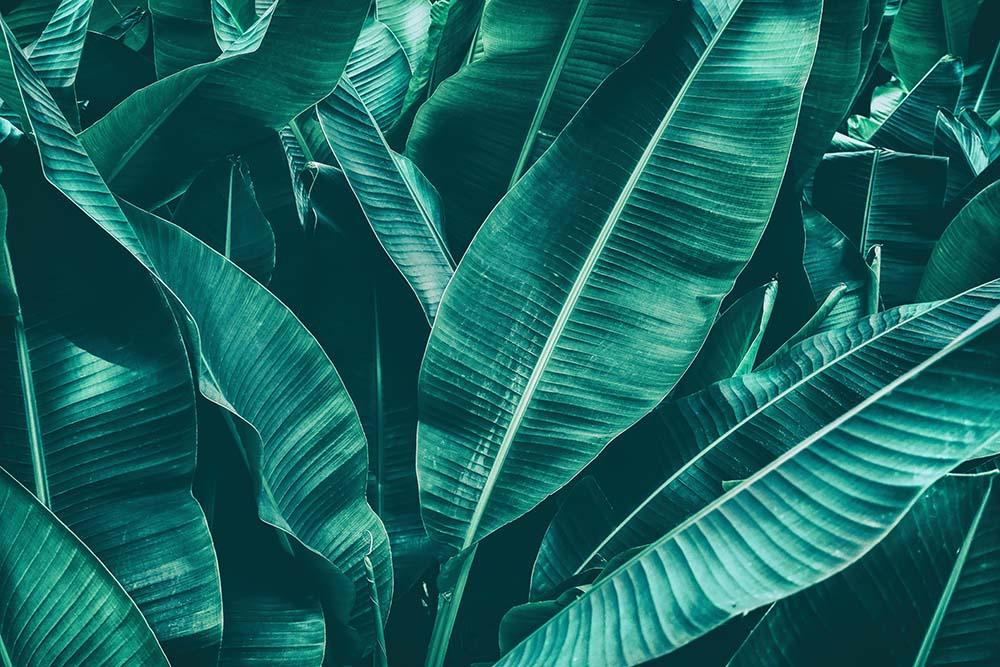 Листья - 9 | Wall-Style