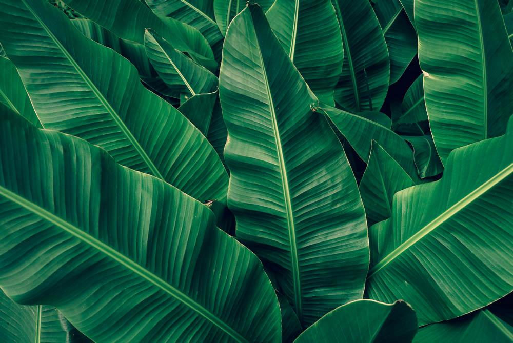 Листья - 8 | Wall-Style