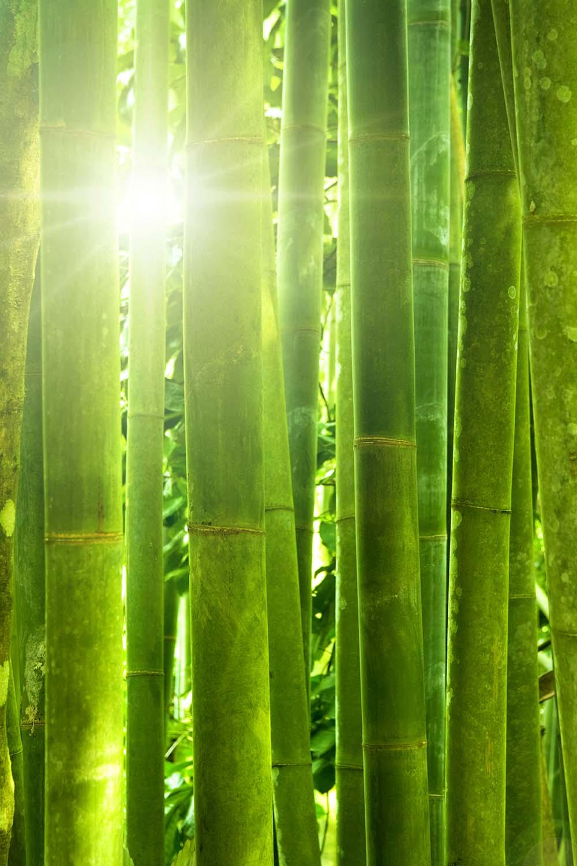 Природа - 24 | Wall-Style