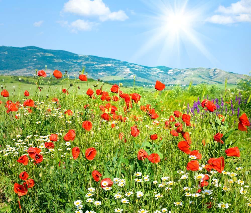 Цветы и растения - 12 | Wall-Style