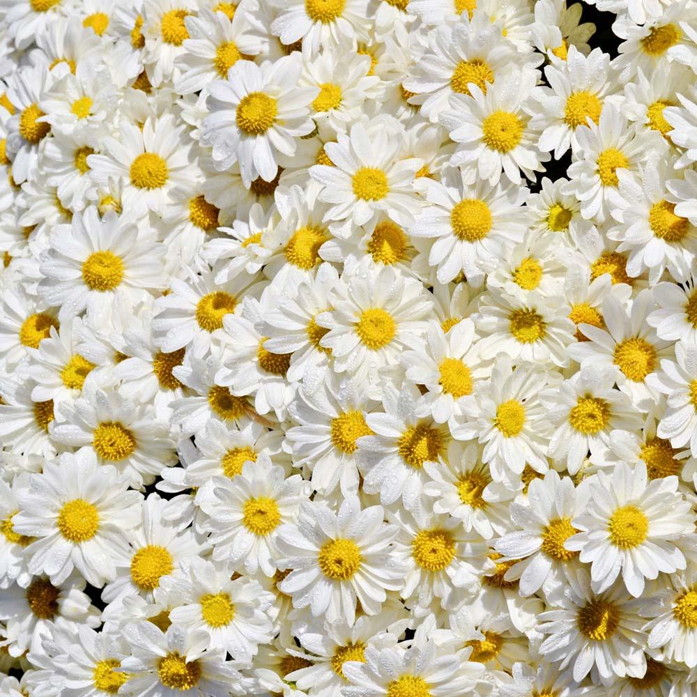 Цветы и растения - 22 | Wall-Style