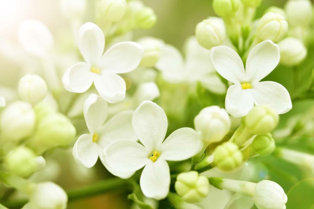 Цветы и растения - 3   Wall-Style