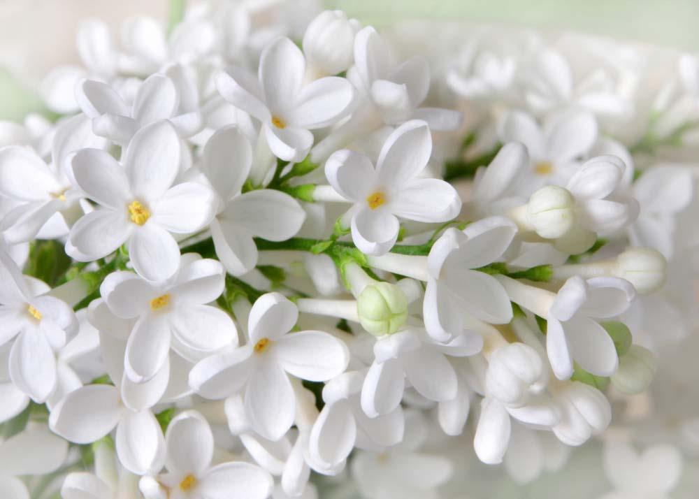 Цветы и растения - 7   Wall-Style