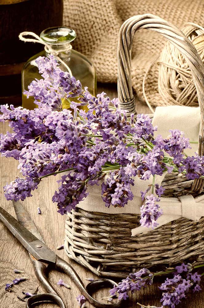 Цветы и растения - 12   Wall-Style