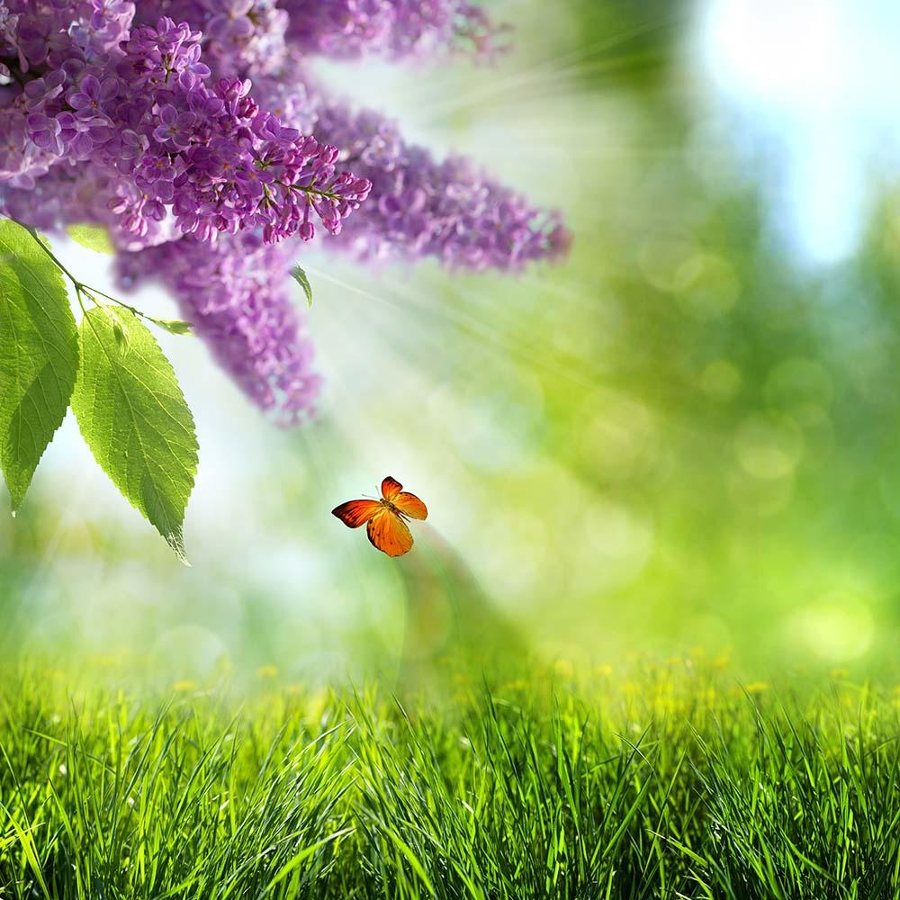 Цветы и растения - 13   Wall-Style