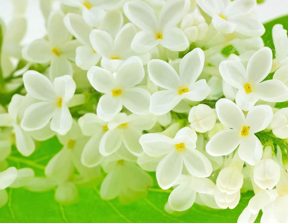 Цветы и растения - 14   Wall-Style