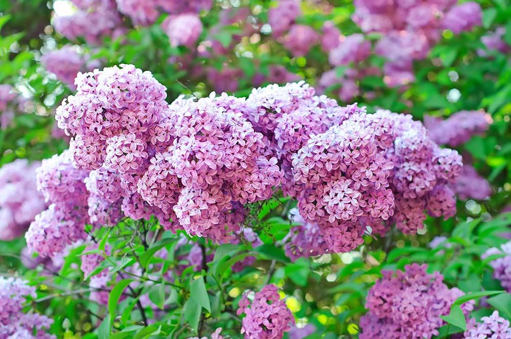 Цветы и растения - 15   Wall-Style
