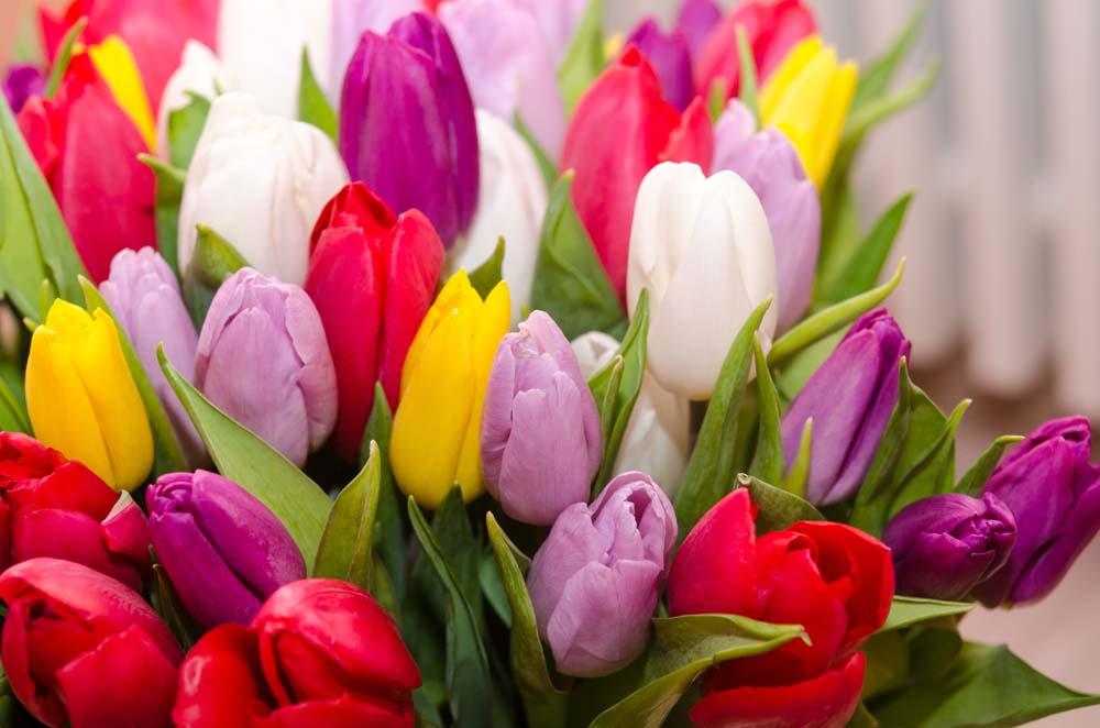 Цветы и растения - 5 | Wall-Style