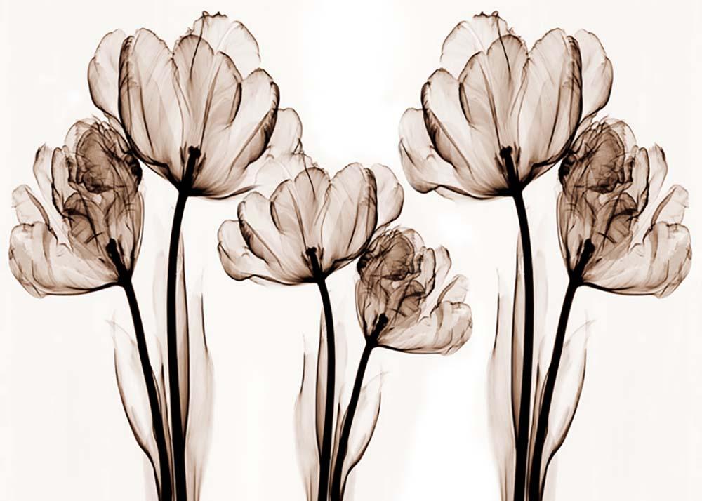 Цветы и растения - 23 | Wall-Style