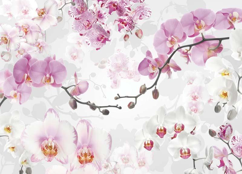 Цветы и растения - 2 | Wall-Style