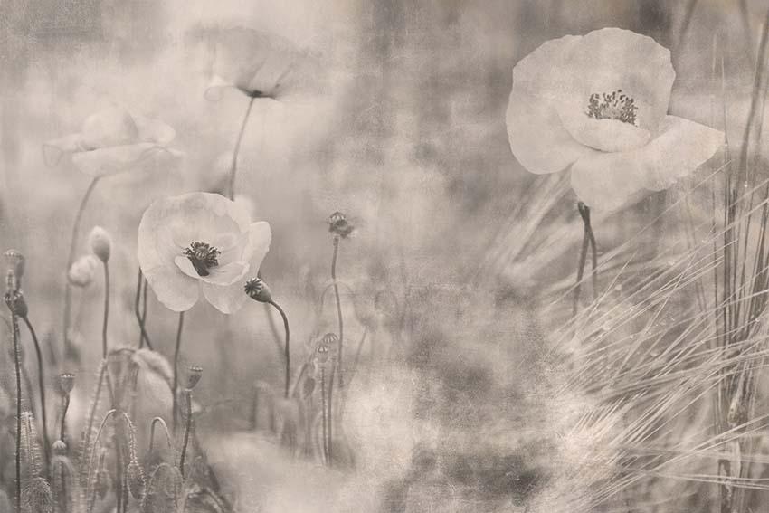 Картины с цветами и растениями