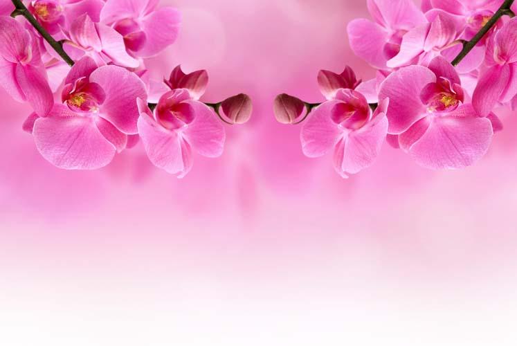 Цветы и растения - 123 | Wall-Style