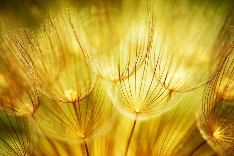 Цветы и растения - 125 | Wall-Style