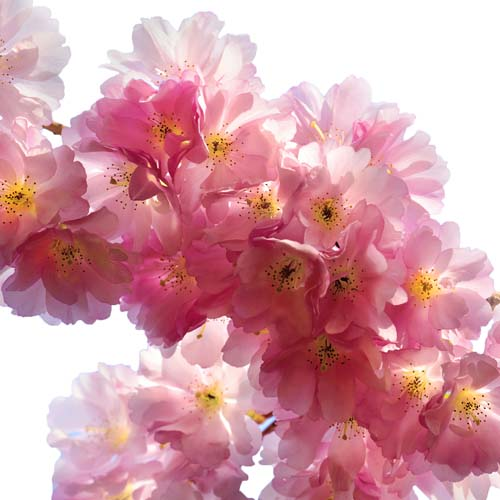 Цветы и растения - 16 | Wall-Style