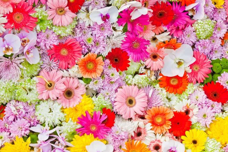 Цветы и растения - 134 | Wall-Style