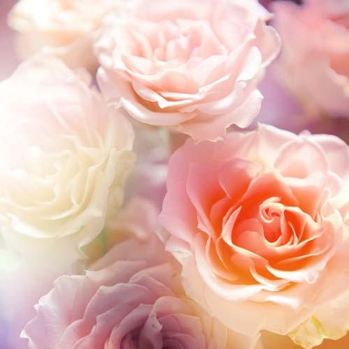 Цветы и растения - 135 | Wall-Style