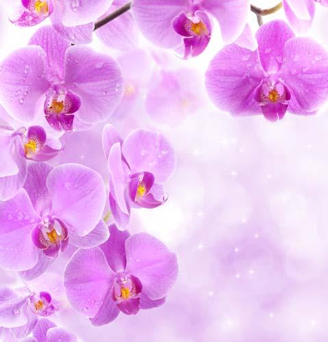 Цветы и растения - 136 | Wall-Style