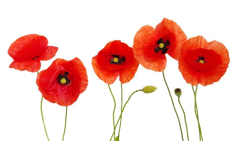Цветы и растения - 140 | Wall-Style
