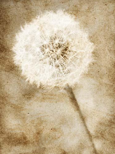 Цветы и растения - 142 | Wall-Style