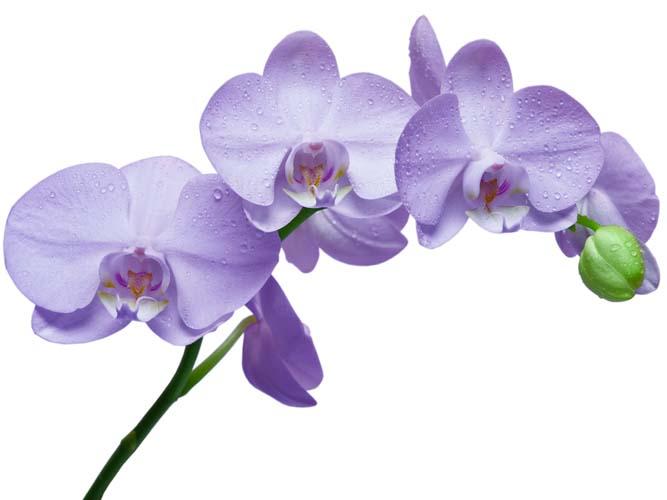 Цветы и растения - 145 | Wall-Style