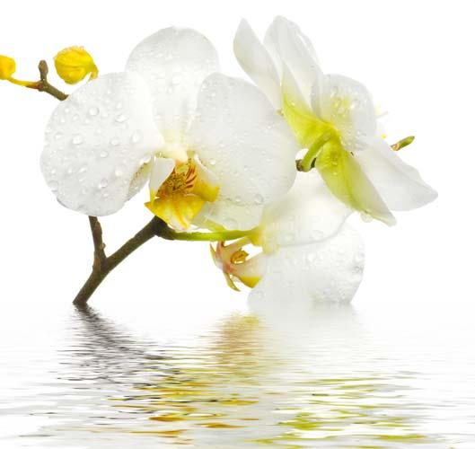 Цветы и растения - 147 | Wall-Style