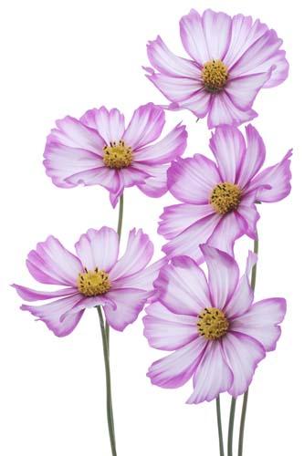 Цветы и растения - 150 | Wall-Style