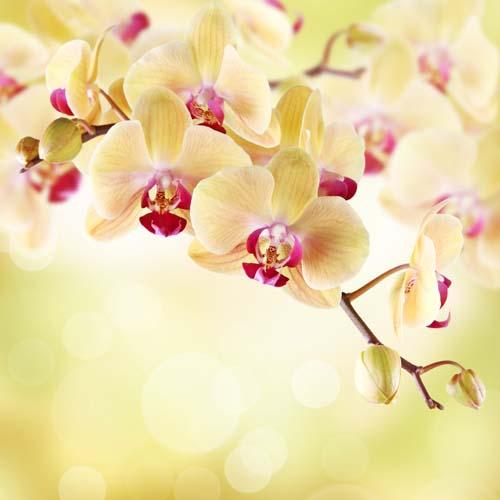 Цветы и растения - 152 | Wall-Style
