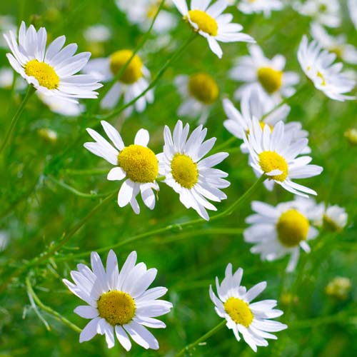 Цветы и растения - 155 | Wall-Style