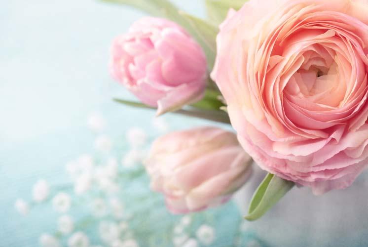 Многослойные тюльпаны