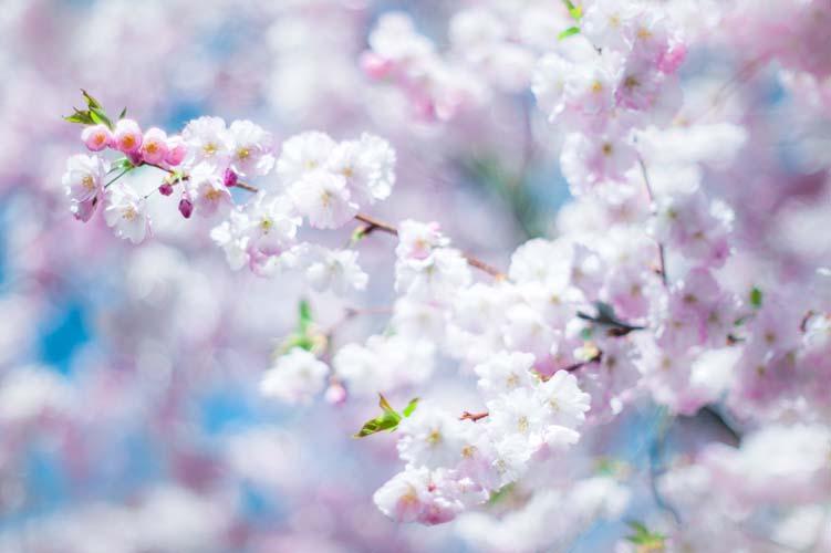 Цветы и растения - 160 | Wall-Style