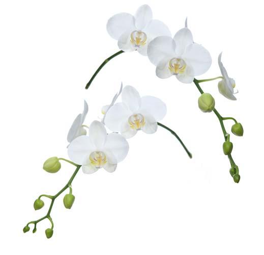 Цветы и растения - 163 | Wall-Style