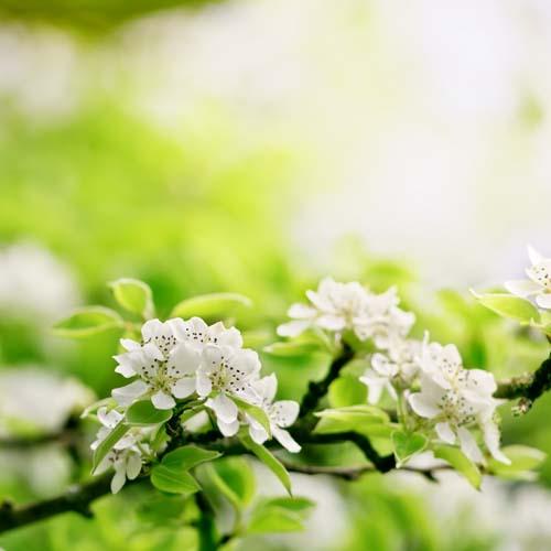 Цветы и растения - 164 | Wall-Style