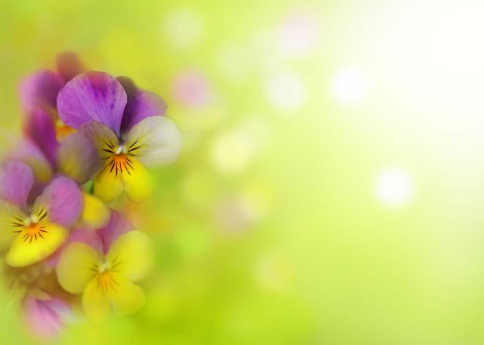 Цветы и растения - 166 | Wall-Style