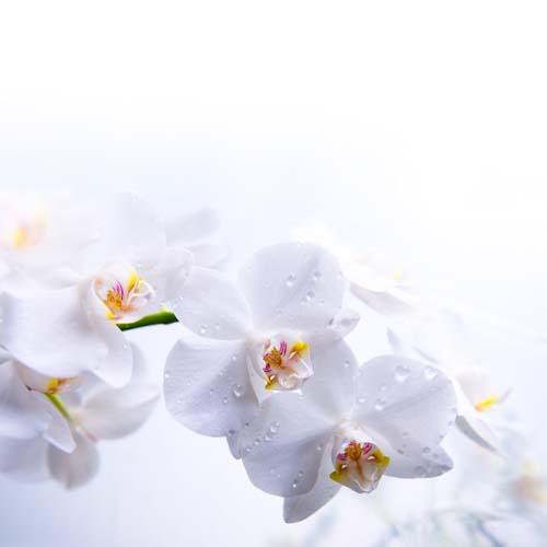 Цветы и растения - 167 | Wall-Style