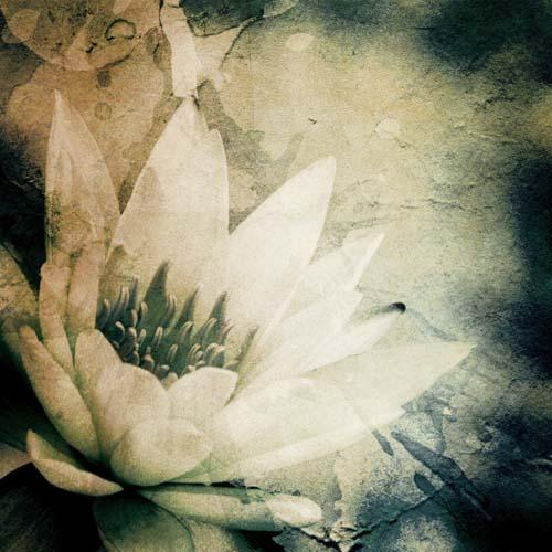 Цветы и растения - 6 | Wall-Style