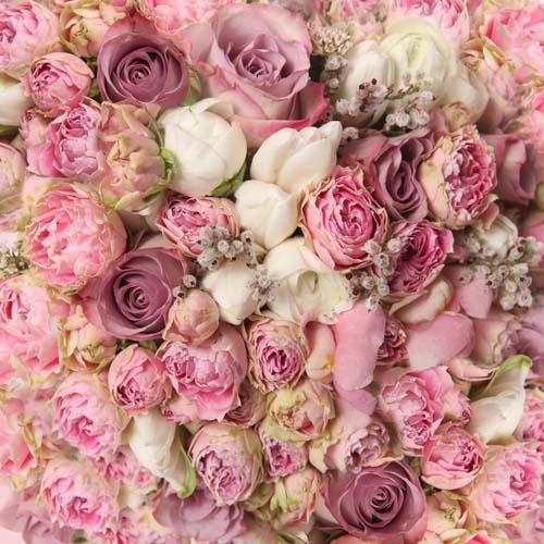 Цветы и растения - 174 | Wall-Style