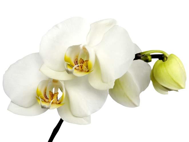 Цветы и растения - 176 | Wall-Style