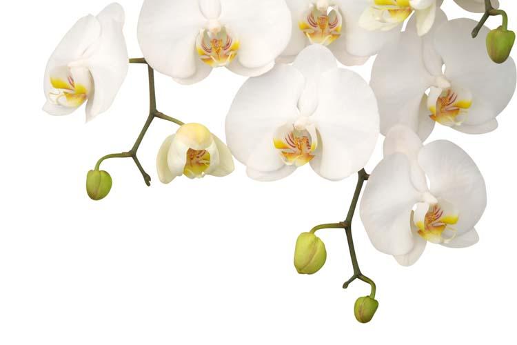 Цветы и растения - 178 | Wall-Style