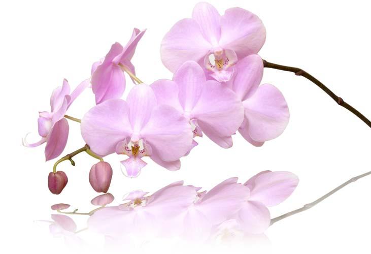 Цветы и растения - 184 | Wall-Style