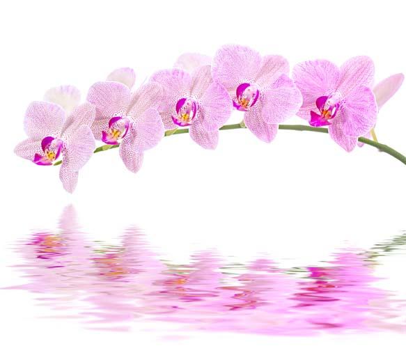 Цветы и растения - 190 | Wall-Style