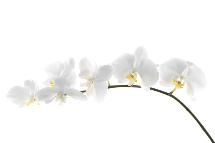 Цветы и растения - 191 | Wall-Style