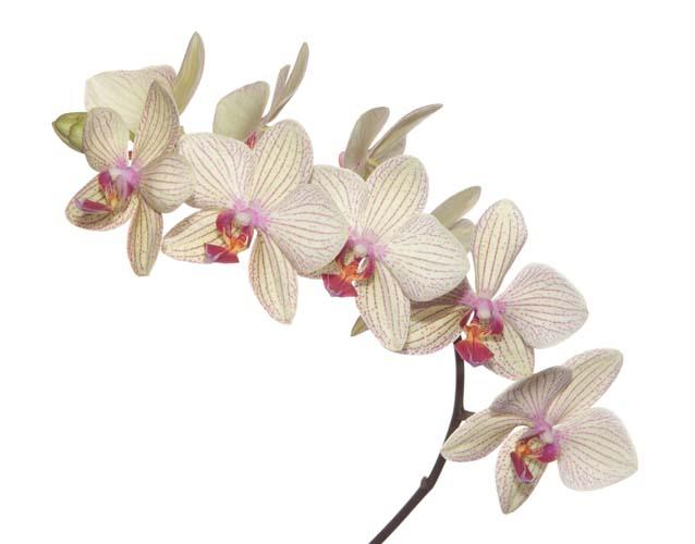 Цветы и растения - 192 | Wall-Style
