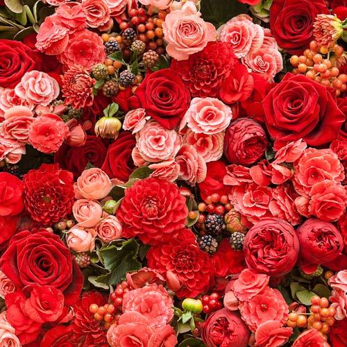 Цветы и растения - 193 | Wall-Style