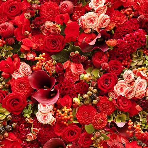 Цветы и растения - 194 | Wall-Style