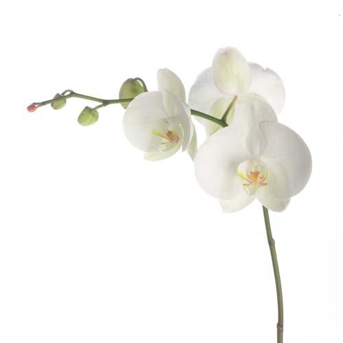 Цветы и растения - 196 | Wall-Style