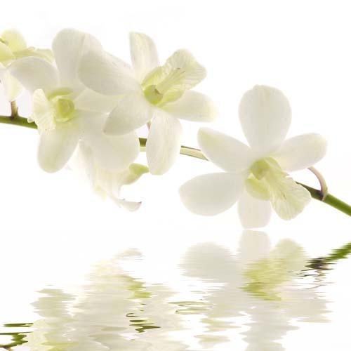 Цветы и растения - 209 | Wall-Style