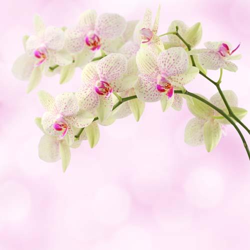 Цветы и растения - 210 | Wall-Style