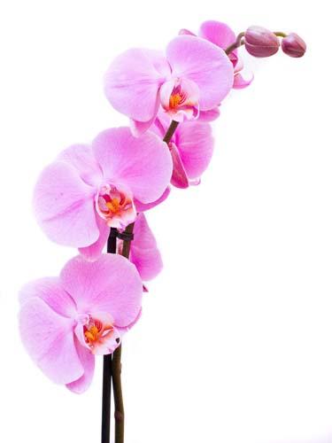 Цветы и растения - 211 | Wall-Style