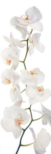 Цветы и растения - 212 | Wall-Style